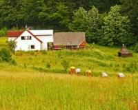 Agroturystyka Gościnna Chata