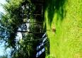 wypoczynek w ogrodzie na leżaczku